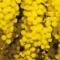 I Fuochi di Primavera. Dalla tradizione…il bello del Vivere!