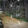 Pescara: si contano i danni al verde ed ai parchi