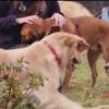 Abruzzo: Consegnati pasti per cani e gatti dei rifugi Enpa