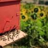 Atti vandalici ai danni degli apicoltori abruzzesi