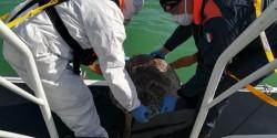 Grazie alla Guardia Costiera sei tartarughe tornano in mare