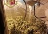 Montesilvano: coltivava in casa marjuana, finisce in manette